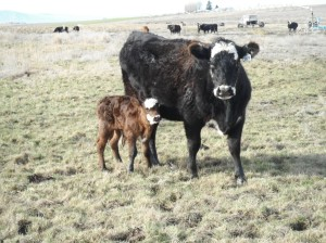 """""""It must be """"try to look like your momma"""" week. Welcome to the world 3489"""""""