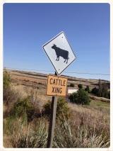 Wordless Wednesday: CattleXing