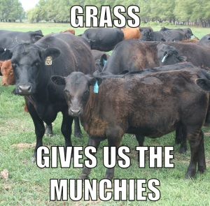 Just one grass-fed beef joke. Promise.